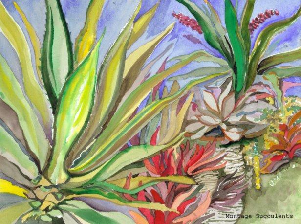 07-Colorful Aloe