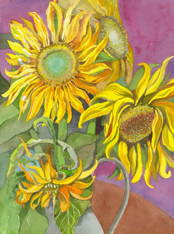 11-Exhaused Mammota Sunflowers